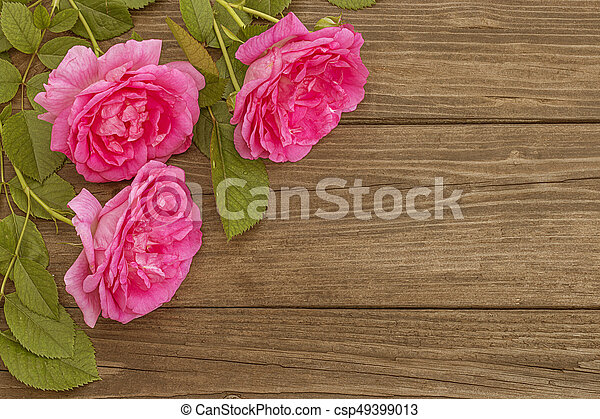 Pink roses on wooden background - csp49399013