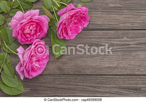 Pink roses on wooden background - csp49399008