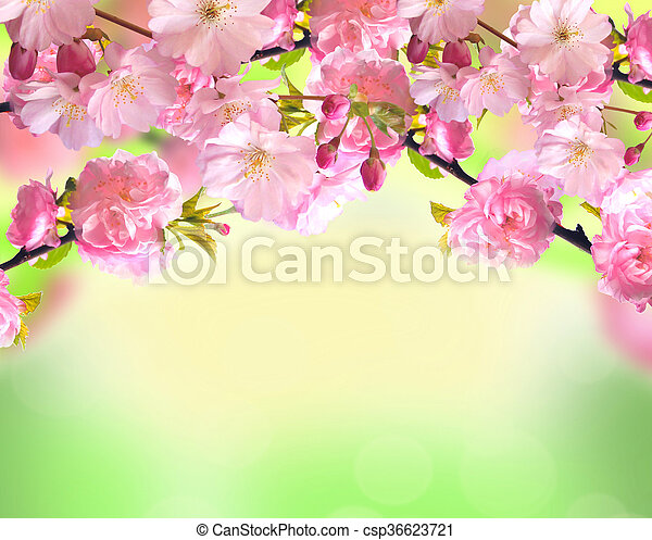 Pink sakura blossom over blurred spring nature background pink sakura blossom over blurred spring nature background csp36623721 mightylinksfo