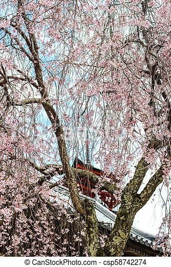 Beautiful Pink Sakura Cherry Blossom Tree With Japanese Temple In