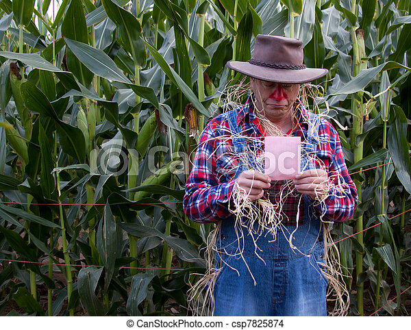 pink slip in corn field - csp7825874