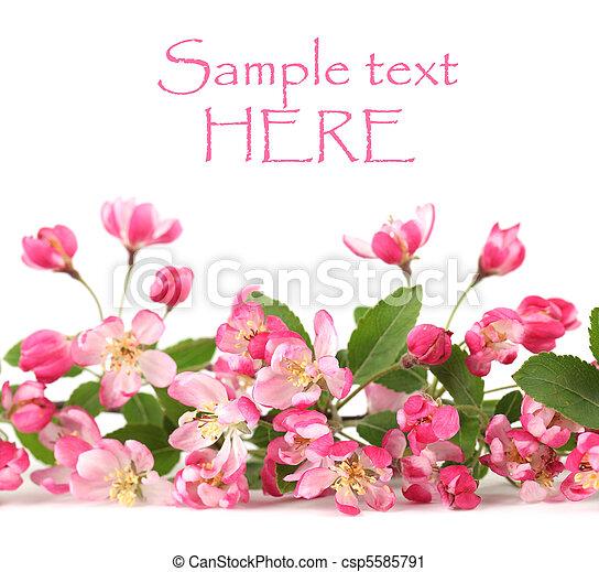 Pink spring flower border border made of pink spring flowers pink spring flower border csp5585791 mightylinksfo