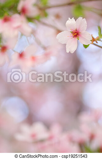 Pink springtime blossom with a blurred background - csp19251543