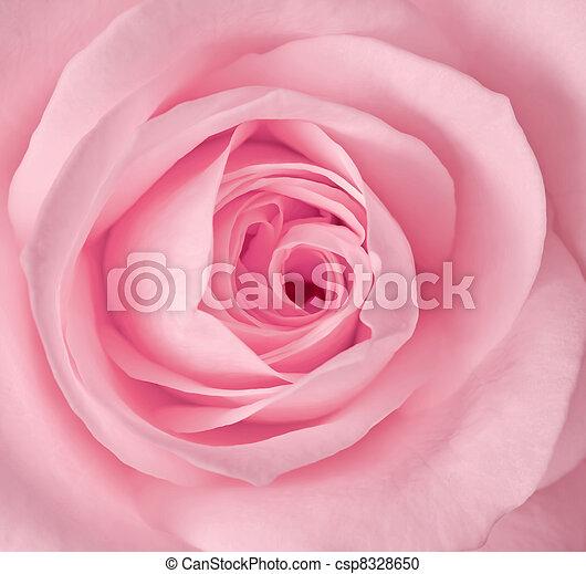 pink stieg, bild, auf, ledig, schließen - csp8328650