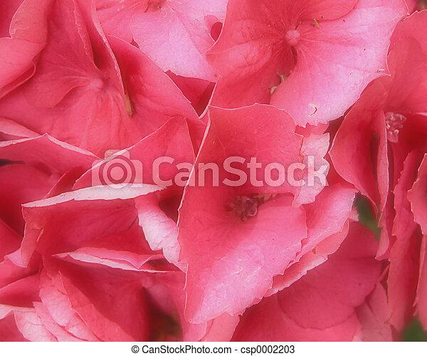 Pink - csp0002203