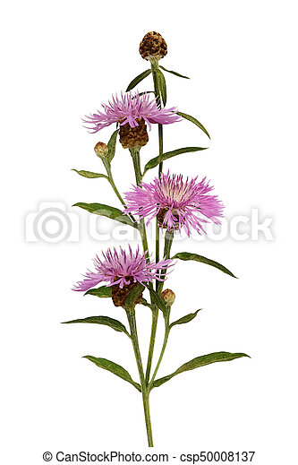 Pink thistle flowers and buds bouquet - csp50008137