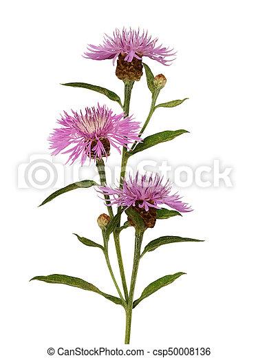 Pink thistle flowers bouquet - csp50008136