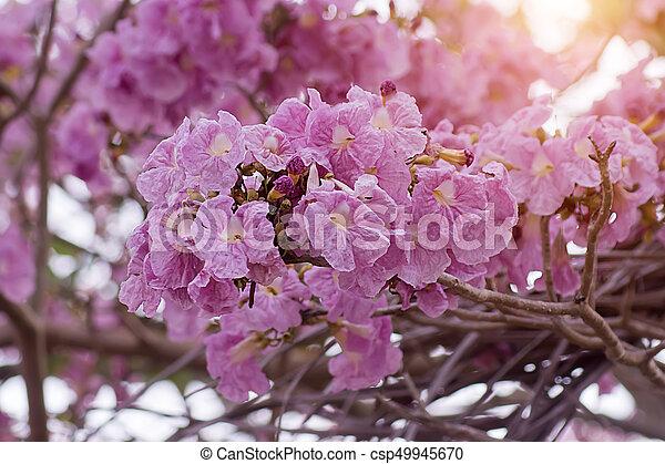 Pink trumpet flower on the branch pink trumpet flower on the branch pink trumpet flower on the branch csp49945670 mightylinksfo