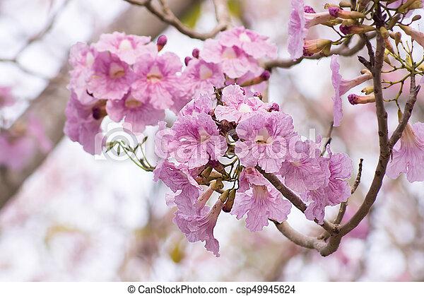 Pink trumpet flower on the branch mightylinksfo