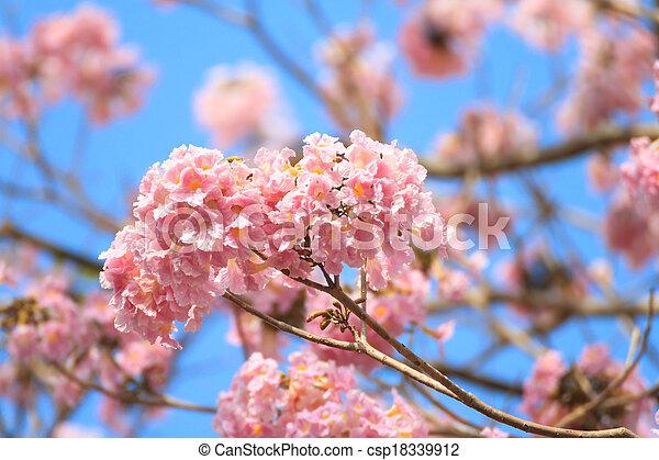Pink trumpet flower pink trumpet or rosy trumpet tree stock pink trumpet flower csp18339912 mightylinksfo