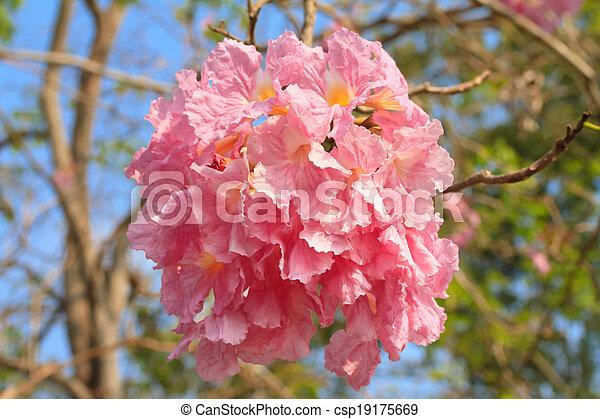 Pink trumpet tree flower pink tecoma or pink trumpet tree stock pink trumpet tree flower csp19175669 mightylinksfo