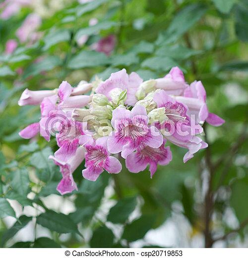 Pink trumpet vine flower mightylinksfo