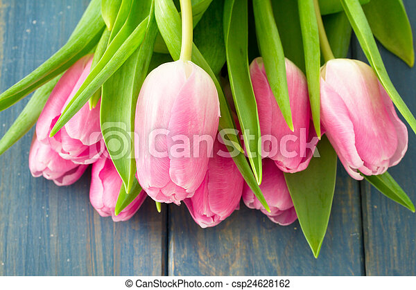 pink tulips on blue wooden background - csp24628162