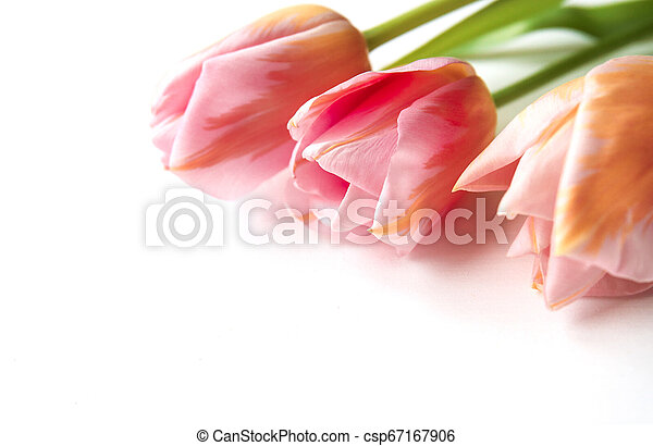 Pink tulips on wooden background, copy space - csp67167906