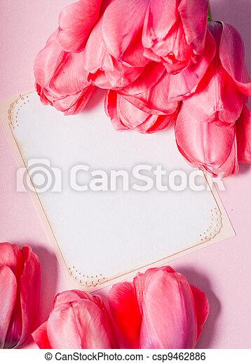 Pink tulips - csp9462886