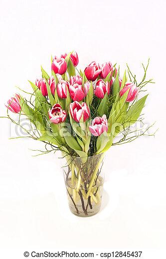 Pink tulips - csp12845437
