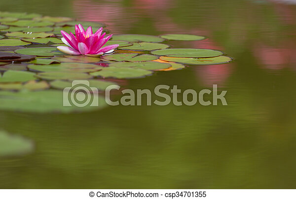Pink water lily is beautifully reflected in lake water - csp34701355