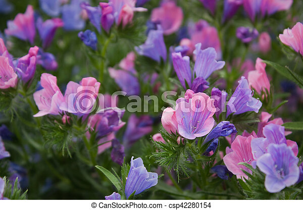 Pinkblue wildflowers background stock images search stock photos pinkblue wildflowers csp42280154 mightylinksfo