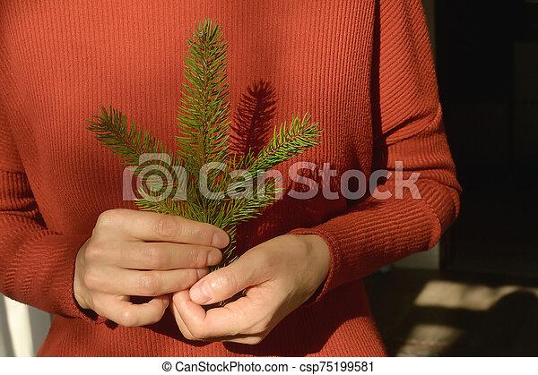 pino, mujer, árbol, tenencia, rama - csp75199581