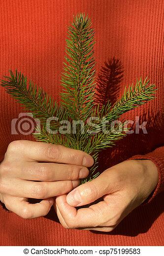 pino, mujer, árbol, tenencia, rama - csp75199583