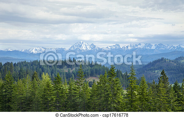Montañas con nieve y pinos en el estado de Washington - csp17616778