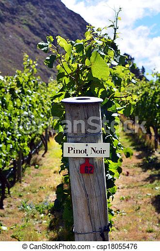 Pinot Noir sign on grape vine - csp18055476