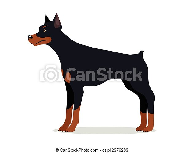 Pinscher doberman isolato dobermann quadrato atletico serie