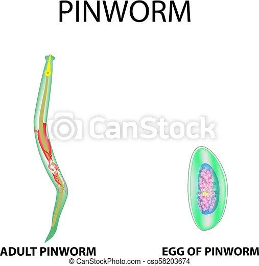 pinworms ábra parazitálja milyen gyógyszereket