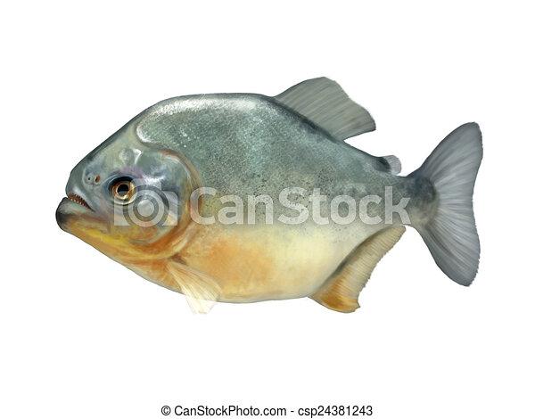 piranha - csp24381243