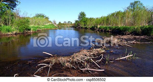 Piscasaw Creek Beaver Dam - csp8506502