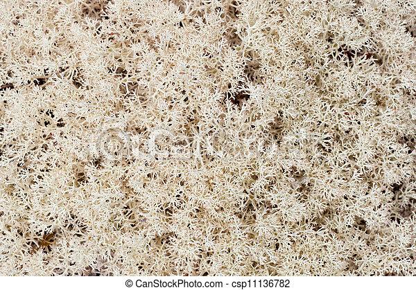 El fondo de los lichenes cubre el suelo del bosque - csp11136782