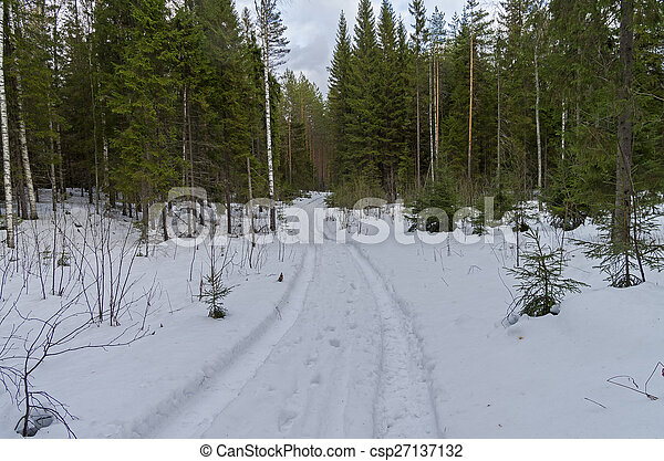 Rastreo en el bosque invernal. - csp27137132