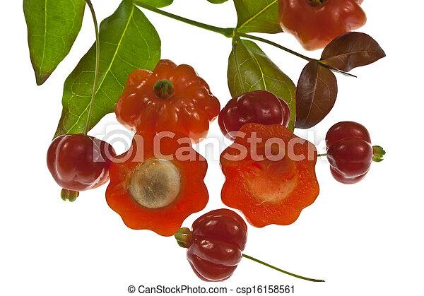 Pitanga Fruit  - csp16158561