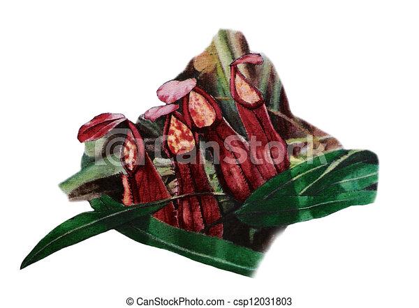pitcher plant - csp12031803