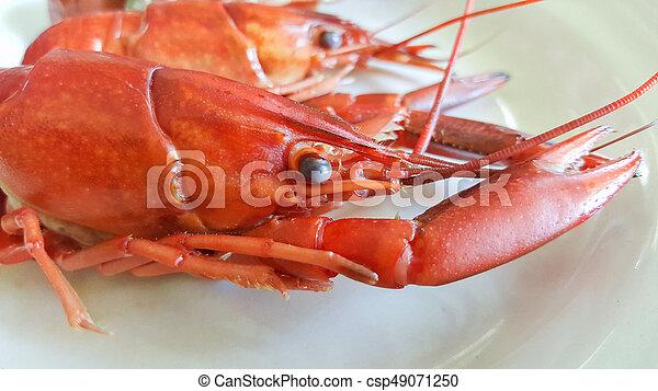 Los cangrejos hervidos en el plato - csp49071250