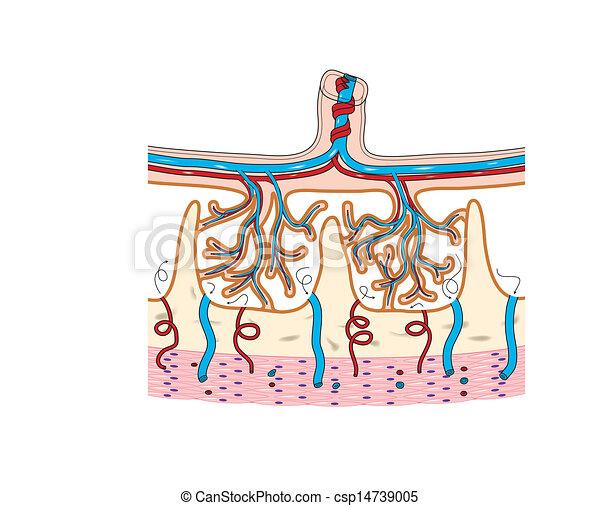 Placenta Chorionic villi - csp14739005