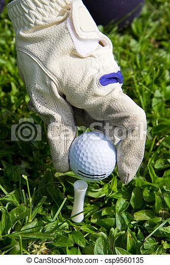 Placing golf ball on a tee - csp9560135