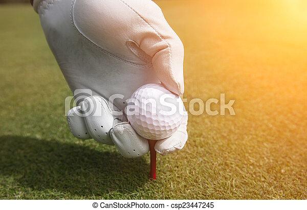 Placing golf ball on a tee - csp23447245