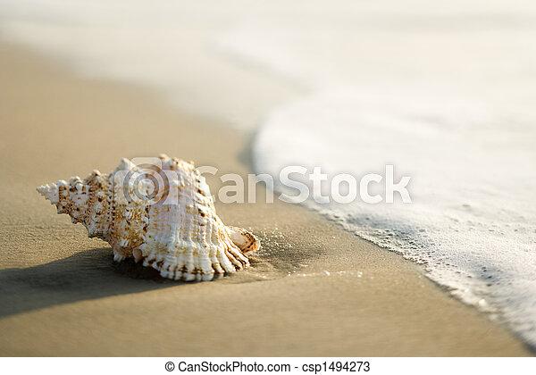 plage., coquille - csp1494273