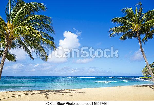 plage, sablonneux, paume, hawaï, arbres - csp14508766
