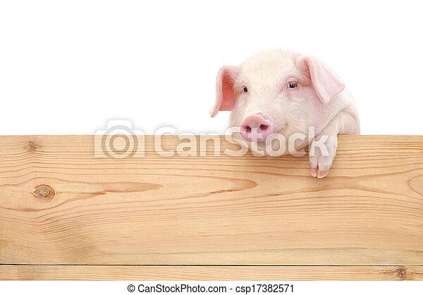plank, varken - csp17382571