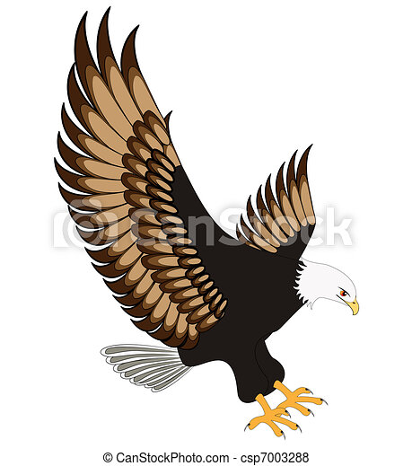 Aguila voladora aislada a fondo blanco - csp7003288