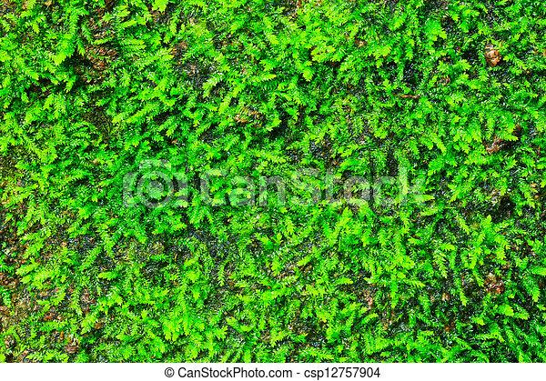 Moss verde en el fondo del bosque - csp12757904