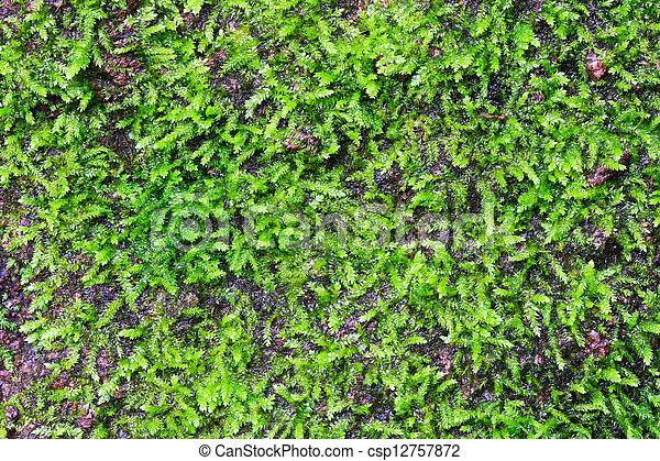 Musgo verde en el fondo del bosque - csp12757872