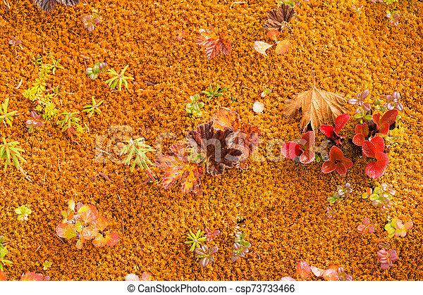 plano de fondo, colores, ártico, tundra, otoño, naturaleza - csp73733466