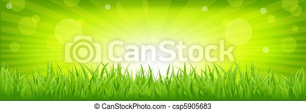 Hierba con fondo verde - csp5905683