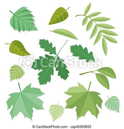 Colección de hojas verdes. Vector, ilustración en estilo plano aislado en el fondo blanco EPS10. - csp45593633