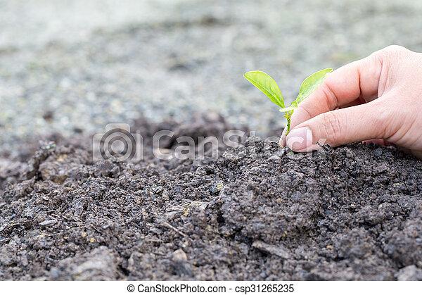 Plant a tree - csp31265235