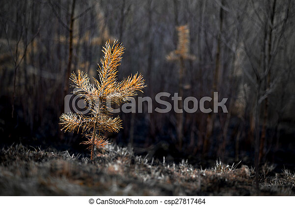 plant after fire - csp27817464