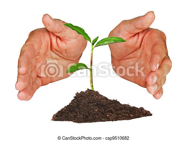 plant, beschermd, handen - csp9510682